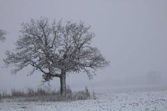 w drzewo Obrazy Stock