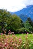 W duża wysokość terenie jesień krajobraz Obraz Royalty Free