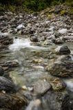 W dzikim płytki strumień Obraz Stock