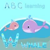 W est pour la baleine de bébé de baleine avec le vecteur mignon de baleine de bande dessinée d'illustration de vecteur d'éclabous illustration de vecteur