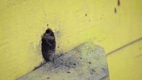 W górę insektów w pudełku dla lęgowych pszczół z Metoda beekeeping zbiory