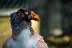 w górę sępa w Frankfurt zoo zdjęcie stock