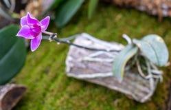 W górę storczykowej kwiat głowy w kwiacie obrazy stock