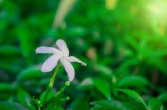 W górę białych kwiatów wyróżniający zdjęcia stock