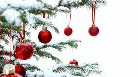 W górę czerwonych Bożenarodzeniowych Baubles piłki wieszać na śniegu zakrywał sosen gałąź zbiory wideo
