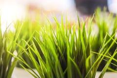 W górę dekoracyjnej zielonej trawy salowej fotografia royalty free