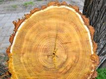 w górę drewnianego tarcicy zamknięta rżnięta tekstura Zdjęcie Royalty Free