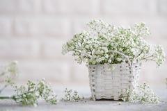 W górę dziecko oddechu kwiatów zdjęcia royalty free