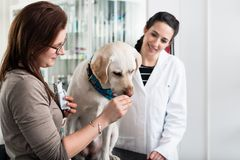 W górę kobiety karmienia psa obraz royalty free