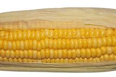 w górę kolor żółty zamknięta kukurudza Zdjęcie Stock