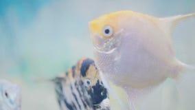 W g?r? pi?knej akwarium ryby Podwodny w g?r? zbiory