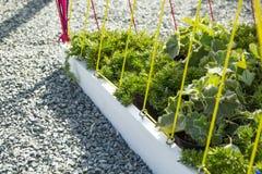 W górę projektanta flowerbed Żwir, rośliny i arkany, zdjęcia stock