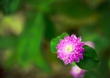 W górę purpura kwiatu z zielonym rozmytym tłem obraz stock
