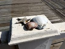 W górę seashells i suchego rozgwiazdy kłamstwa na drewnianym białym żywopłocie zdjęcie stock