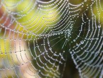 w górę sieci zamknięty pająk Zdjęcie Stock