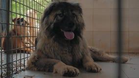 W górę smutnego psa w schronieniu za płotowym czekaniem ratować i adoptującym nowy dom Schronienie dla zwierzęcia pojęcia zbiory