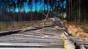 W górę spadać ogrodzenia reforested teren w wiejskim lesie obraz royalty free
