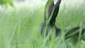 W górę strzału chuje w trawie królik zbiory wideo