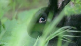 W górę strzału królik głowa w trawie zbiory