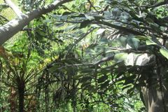 W górę Treetops w Floryda w fotografia stock