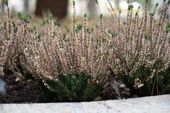 W górę widoku wildflowers wśrodku ogródu fotografia stock