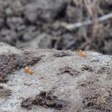 W górę zamkniętych mrówek Zdjęcie Royalty Free