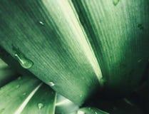 W górę zielonych liści z abstraktem i zielenią zdjęcie stock