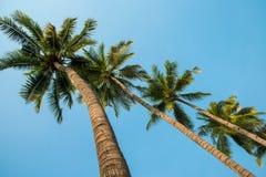 W górę kokosowego drzewa niebieskiego nieba i Zdjęcie Stock
