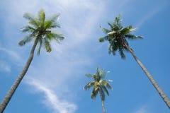 W górę kokosowego drzewa niebieskiego nieba i Obraz Stock