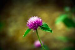 W górę purpura kwiatu na rozmytym tle zdjęcie stock