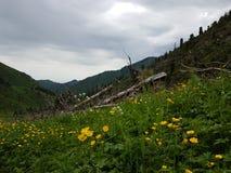 W górach Obraz Royalty Free