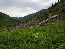 W górach Zdjęcia Royalty Free