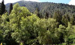 W górach Kaukaz Zdjęcia Stock