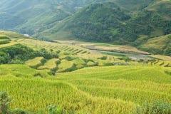 W górach ryżowi tarasy obrazy stock