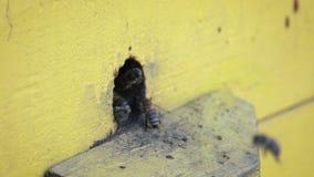 W g?r? insekt?w w pude?ku dla l?gowych pszcz?? z Metoda beekeeping zbiory wideo