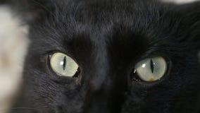 W g?r?, 4k, zieleni oczy czarny kot zbiory wideo