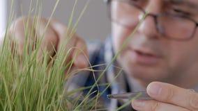 W g?r? m??czyzny w szk?ach w laboratorium egzamininuje flance osuszka yellowed trawa, dotyka szklanego pr?cie zbiory