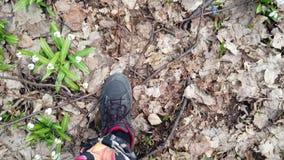 W g?r?, przegl?da z g?ry, w wiosna lesie w?r?d ?nie?yczek, chodz?ce samiec nogi w butach, ?nie?yczki jest rzadkimi kwiatami zbiory wideo