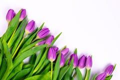 W g?r? purpurowych tulipan?w odizolowywaj?cych na bia?ym tle obraz stock