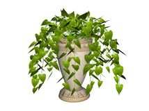 W garnku filodendron roślina Fotografia Stock