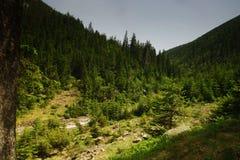 W Gigantycznych górach w republika czech zdjęcia stock