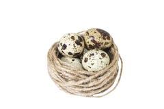 W gniazdeczku przepiórek jajka Fotografia Stock