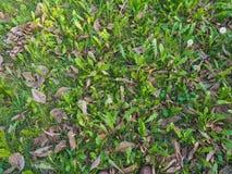w idealnym przypadku trawy meadow swój Fotografia Royalty Free