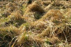 w idealnym przypadku trawy meadow swój Fotografia Stock