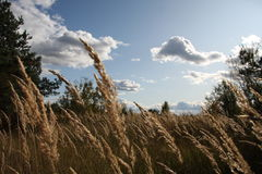 w idealnym przypadku trawy meadow swój Obrazy Stock