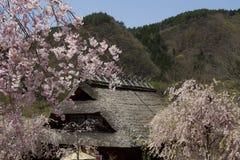 W Japonia czereśniowi okwitnięcia Obrazy Royalty Free