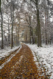 W jesień lesie ścieżka Zdjęcie Stock