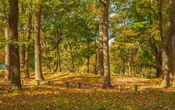W jesień parku Zdjęcie Stock