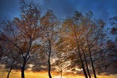 W Jesień brzoz drzewa Obrazy Royalty Free