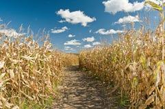 W jesień kukurudzy pole Fotografia Stock